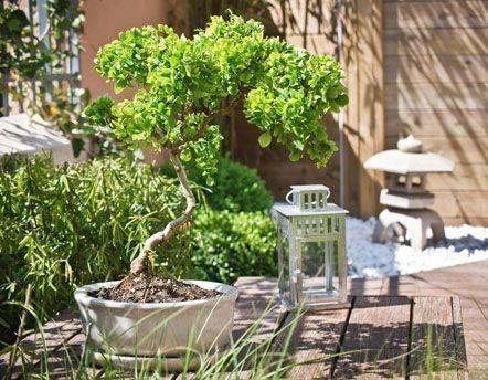 Les meilleurs produits pour votre jardin for Deco du jardin