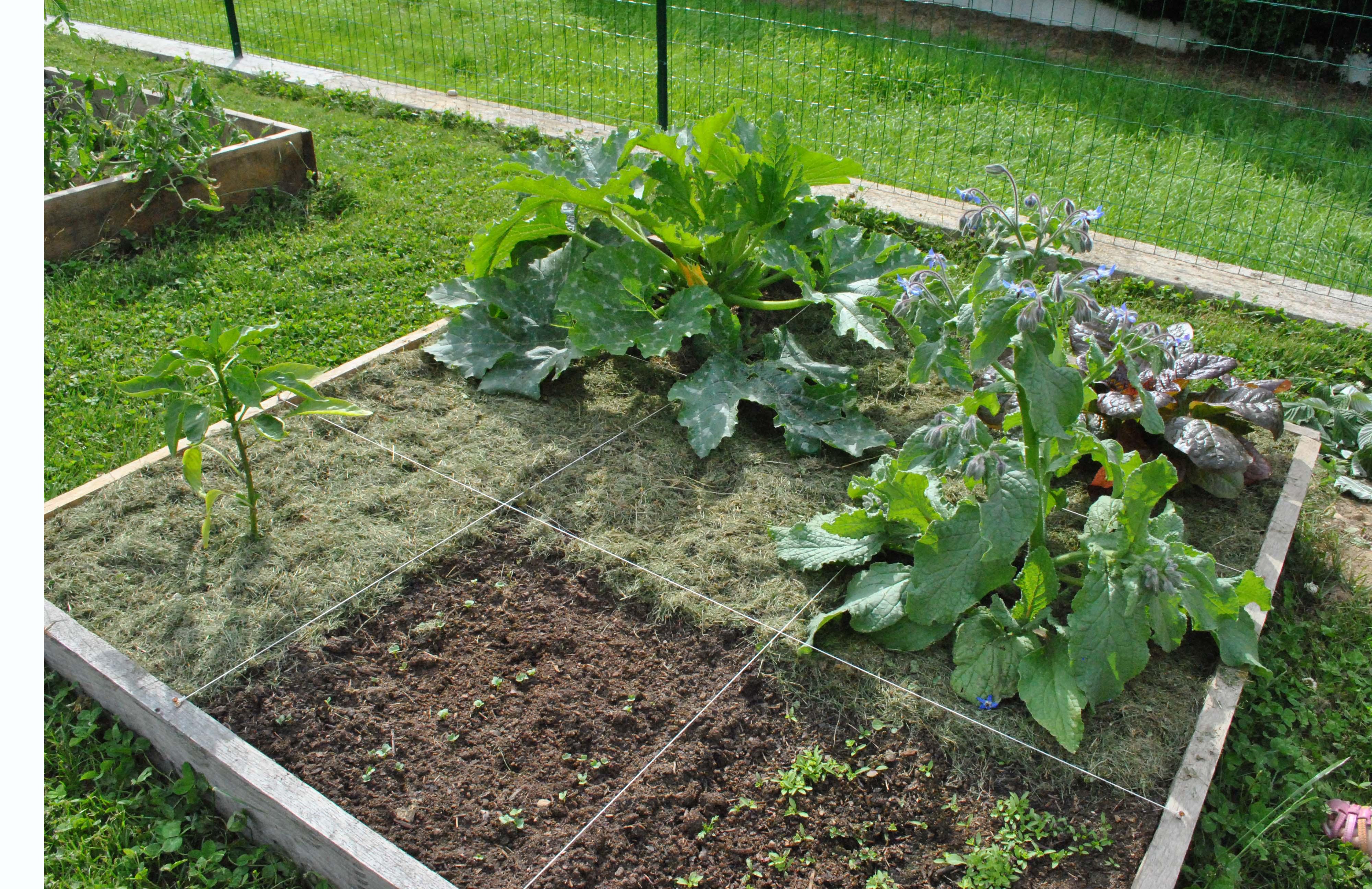 Un Potager En Carré faire un potager : les 4 étapes à suivre - jardindeco