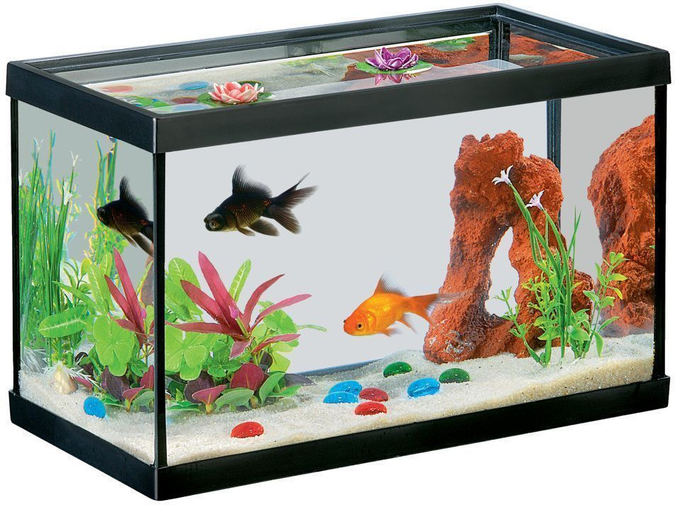 aquarium guide d 39 achat. Black Bedroom Furniture Sets. Home Design Ideas