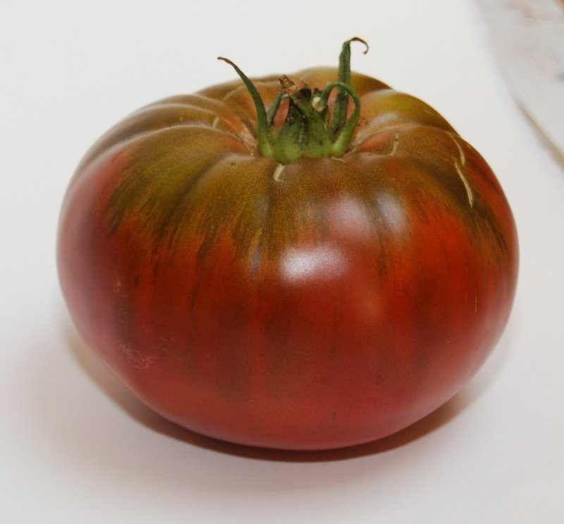 Le purin de tomate - Tomate de crimee ...