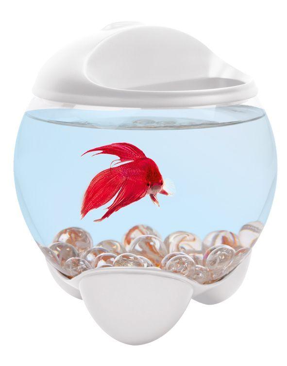 Les trucs sur aquarium for Bulleur pour aquarium boule