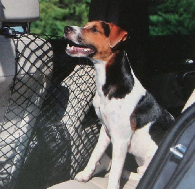 Filet de voiture pour chien