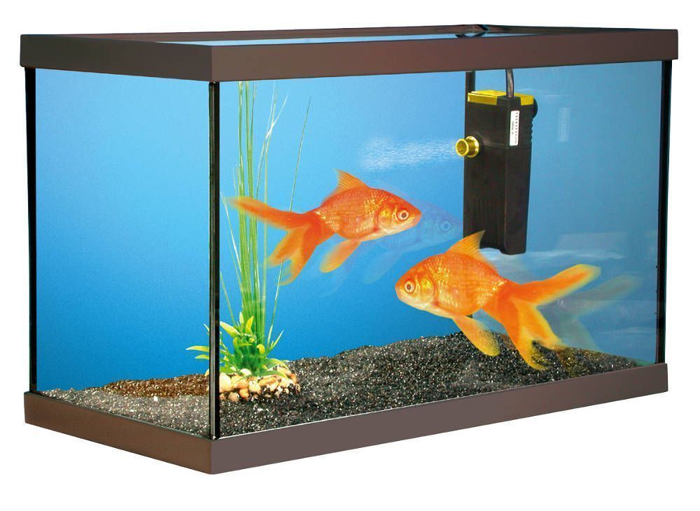 Kit aquarium poisson 28 images kit aquarium poisson for Aquarium poisson rouge dessin