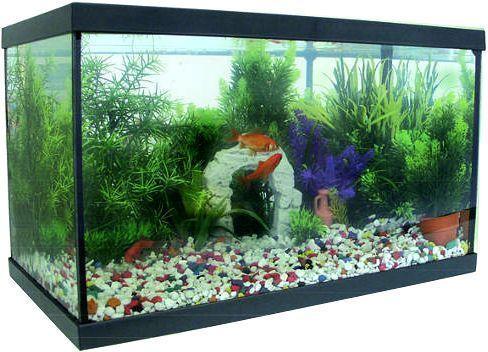 Kit aquarium en verre 20 litres for Aquarium 20 litres