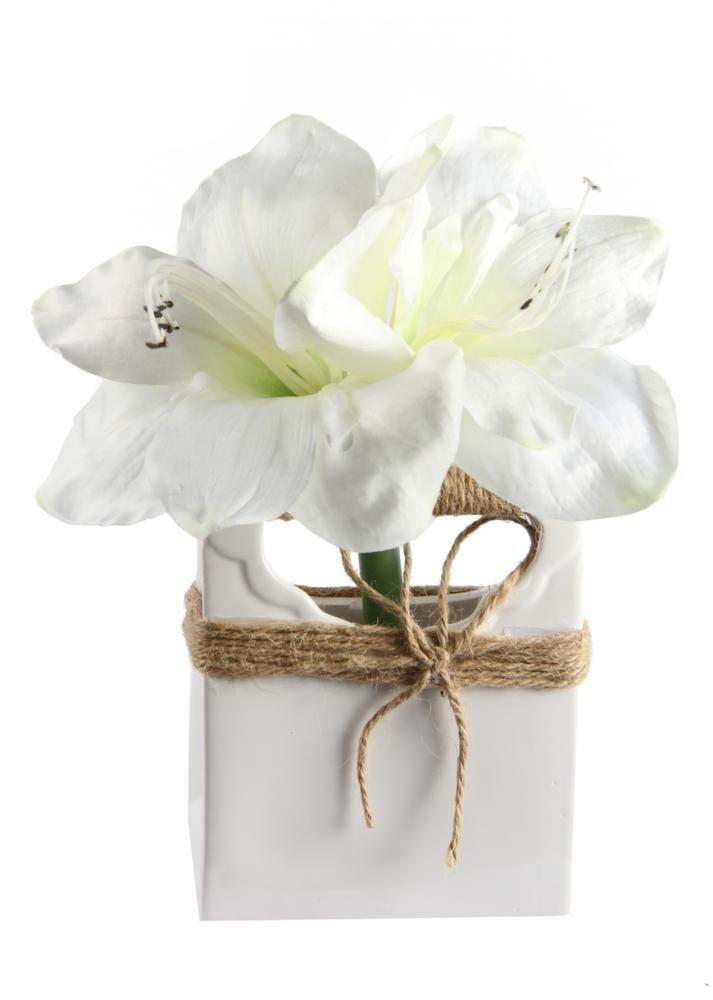 amaryllis fleurs blanches avec vase d co. Black Bedroom Furniture Sets. Home Design Ideas
