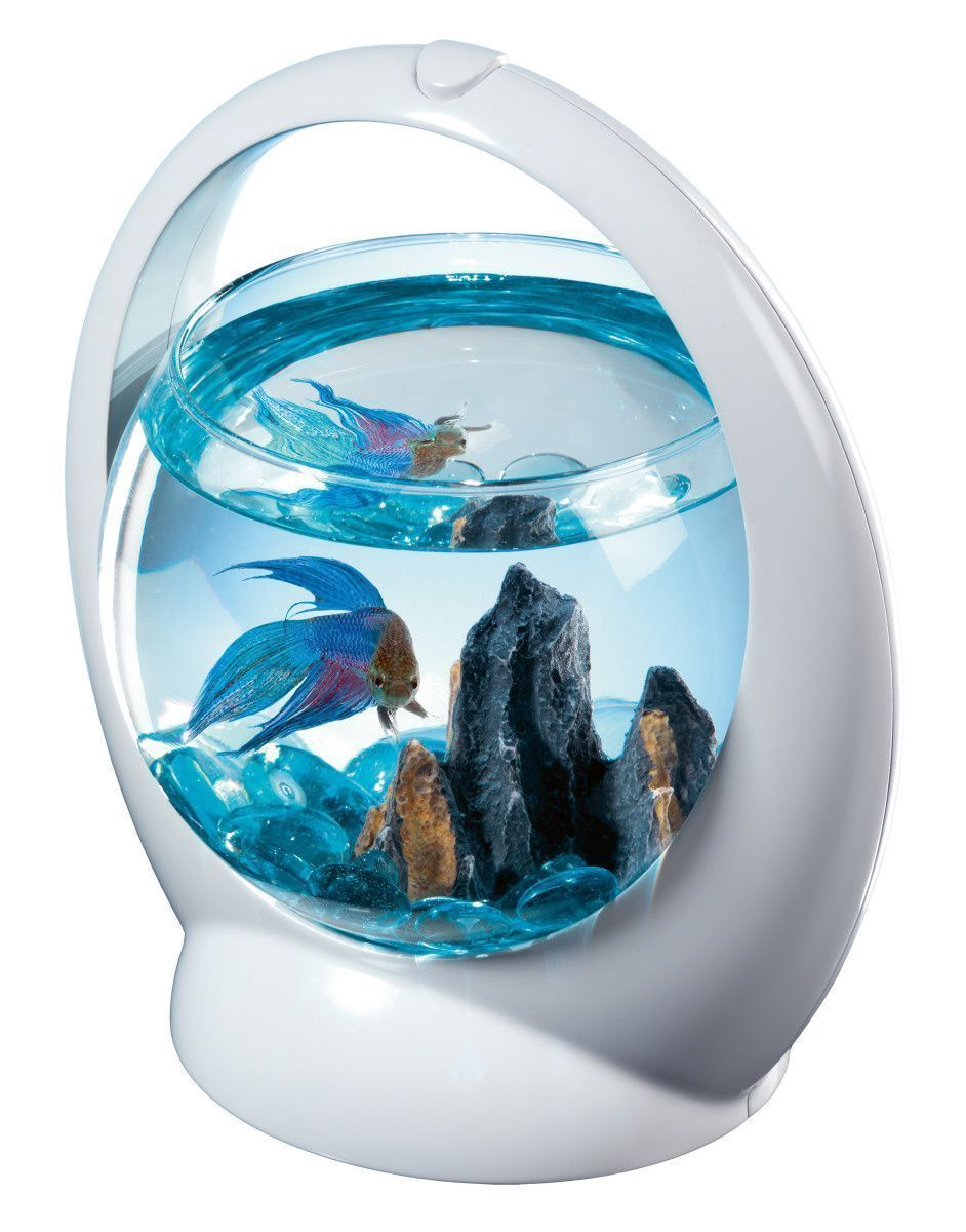 Aquarium boule design poisson combattant-2