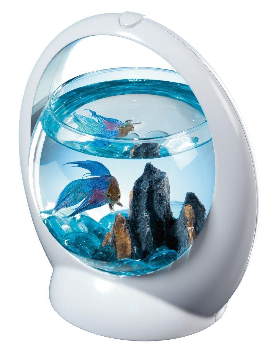 Aquarium boule design poisson combattant for Nourriture pour poisson combattant