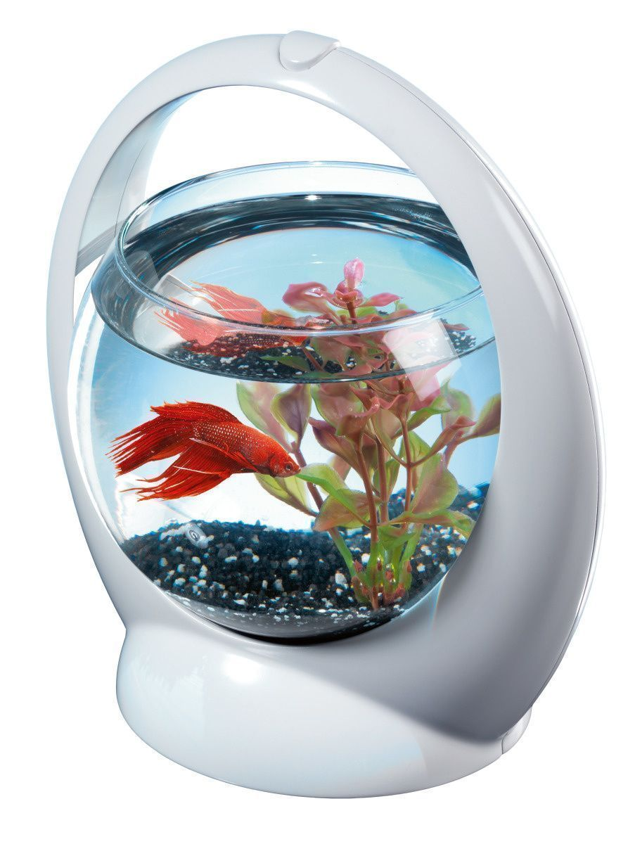 Aquarium boule design poisson combattant for Bocal poisson plastique