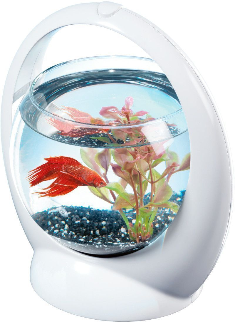 Aquarium boule design poisson combattant for Petit aquarium boule