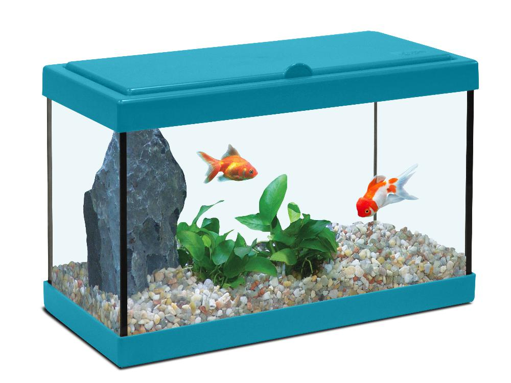 Aquarium enfant bleu lagon for Aquarium poisson rouge taille