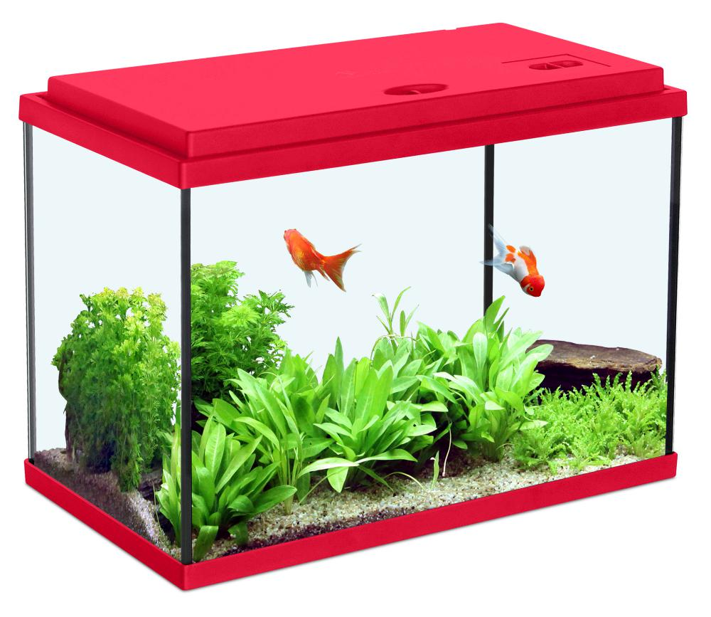 Aquarium enfant rouge cerise for Aquarium poisson rouge dessin