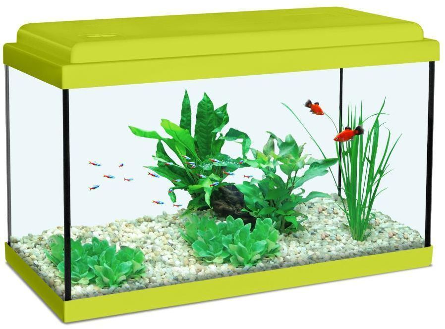 Aquarium enfant vert kiwi for Pompe pour petit aquarium poisson rouge