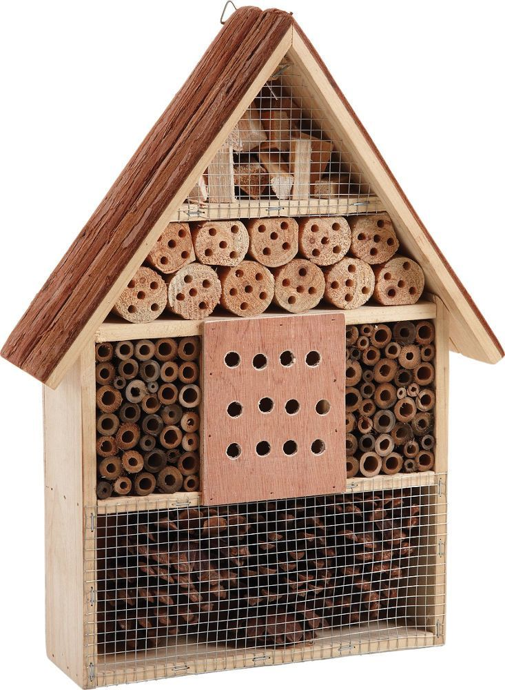 Chalet insectes - Insecte maison humidite ...