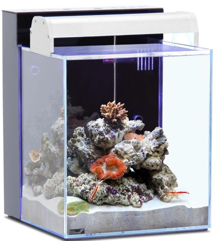 aquarium eau de mer 40 litres sur jardindeco. Black Bedroom Furniture Sets. Home Design Ideas