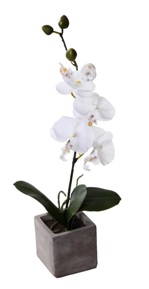 Orchidée 1 branche avec pot effet ciment (blanc)