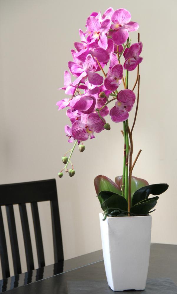 orchid e fuchsia en pot blanc fuchsia. Black Bedroom Furniture Sets. Home Design Ideas