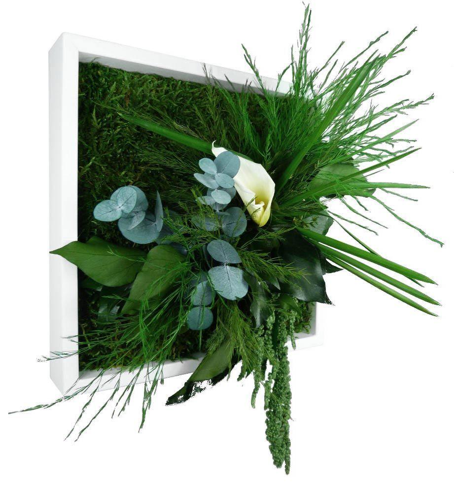 tableau nature mono avec plantes stabilis es. Black Bedroom Furniture Sets. Home Design Ideas