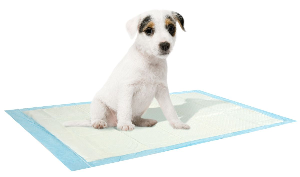 Tapis absorbant pour chiots lot de 10 for Lot meuble ecureuil