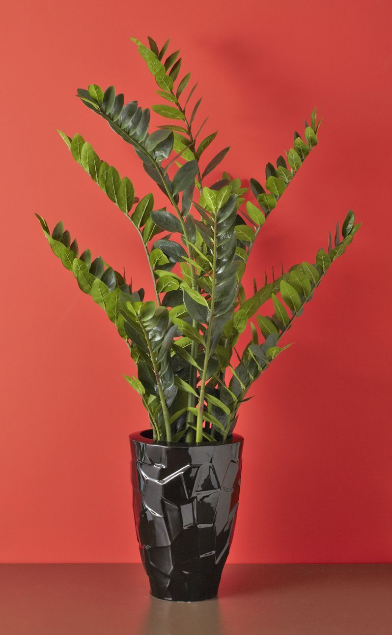 Plante artificielle r aliste zamioculcas 90 cm for Plante 90 cm