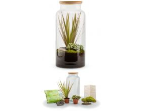 Kit terrarium plantes Jungle mix (L (19 x 41 cm))