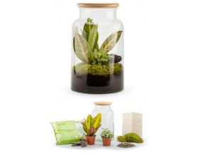 Kit terrarium plantes Jungle mix (M (19 x 31 cm))
