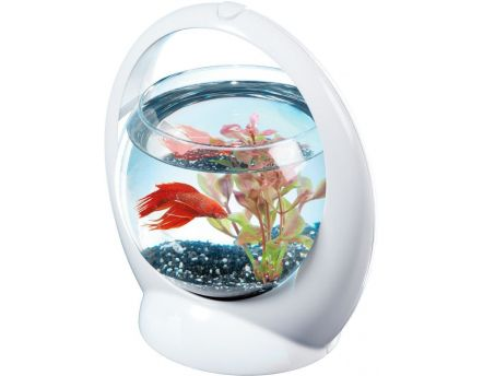Aquarium boule design poisson combattant