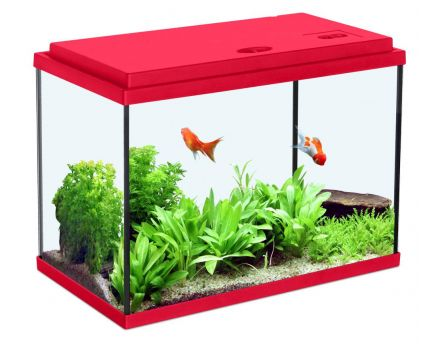 Aquarium enfant rouge cerise (18L)