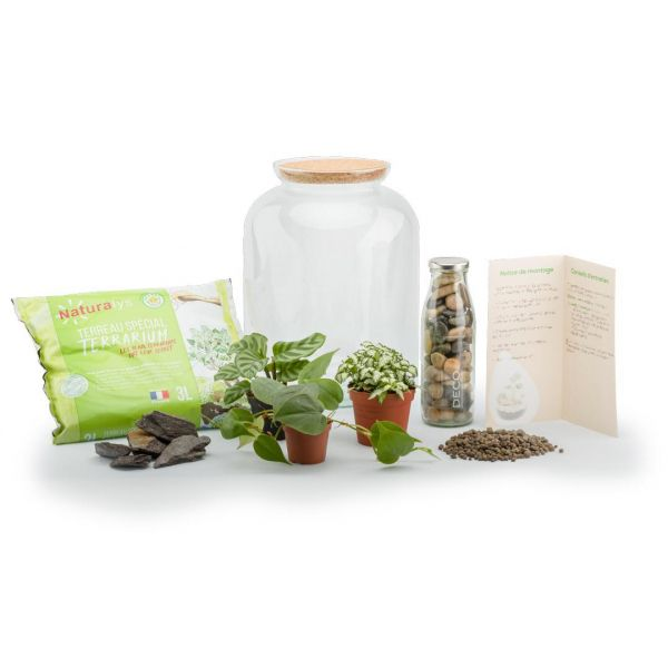 Kit terrarium plantes Bonbonne mix - NAT-0122