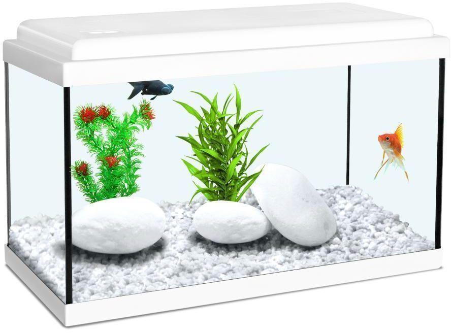 déco aquarium blanc