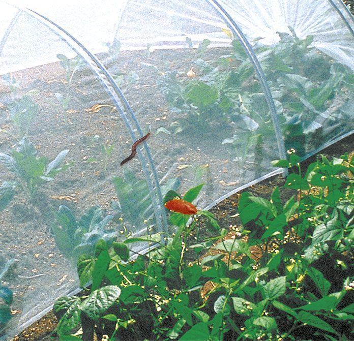 Potager couvert plantation culture for Peinture anti insectes