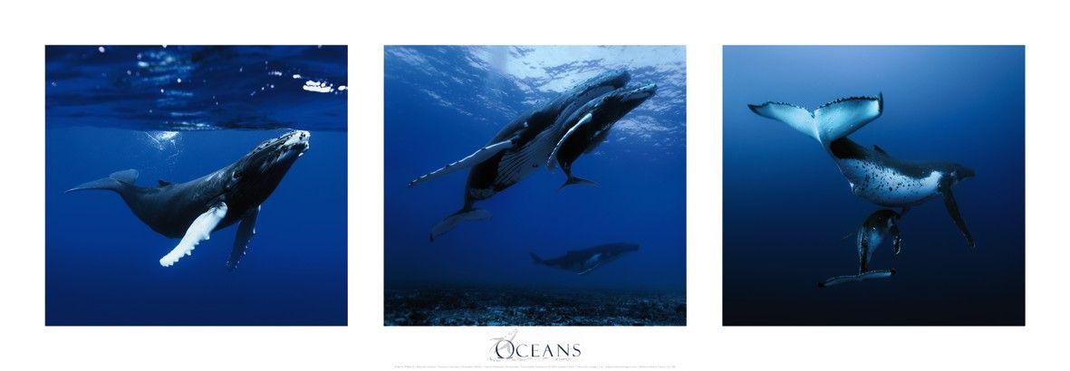 Affiche-baleines-a-bosse-Polynesie-francaise