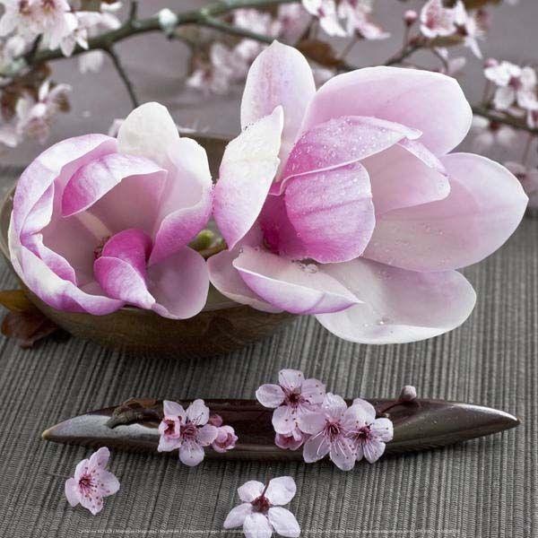 Affiche-Magnolias-Catherine-Beyler-30x30-cm